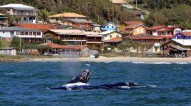 Foto: Rota da Baleia Franca/Divulgação