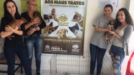Projeto-de-extensao-da-Udesc-Laguna-promove-bem-estar-de-animais-de-rua-na-cidade
