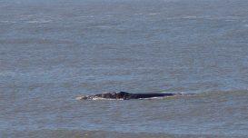 baleia-farol