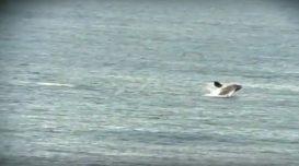 baleia-franca-gi