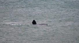 baleia-praaia-do-sol