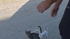 gatos-polemicos
