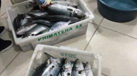 peixe-apreendido-6-jul-e1594115436618