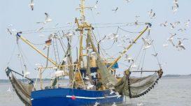 pesca-de-arrasto
