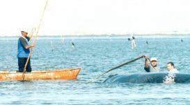 resgate baleia sunset