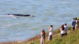rota-da-baleia-franca