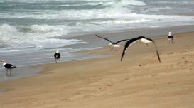 soltura-gaivota