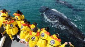 turismo-embarcado-baleia